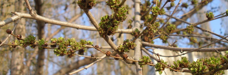 Мир эколога - Весна